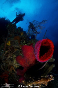 Red sponge with divers by Pietro Cremone 